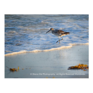 Sandpiper In The Waves: Postcard
