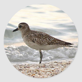 Sandpiper on beach in Florida on sticker