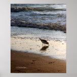 Sandpiper Poster