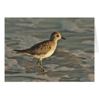Sandpiper standing in ocean on the beach card