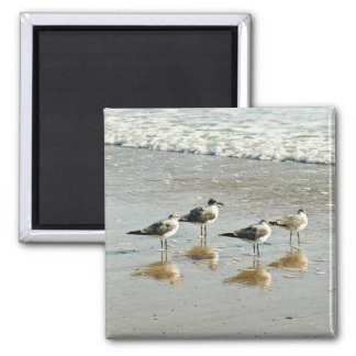 Sandpipers at the ocean's edge 2 inch square magnet