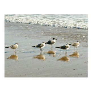 Sandpipers at the ocean's edge postcard