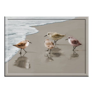 Sandpipers at the Shore Line Poster