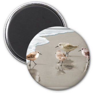 Sandpipers at the Shoreline 2 Inch Round Magnet