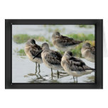 Sandpipers at Water's Edge Greeting Cards