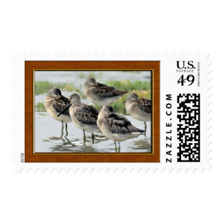 Sandpipers at Water's Edge Postage