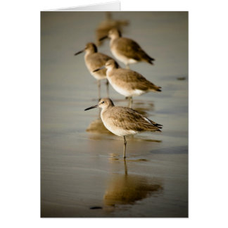 Sandpipers Greeting Cards