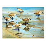 Sandpipers Postcard