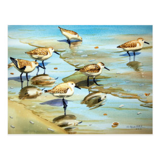 Sandpipers Postcards