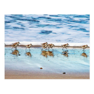 Sandpipers Running Along The Beach Postcard