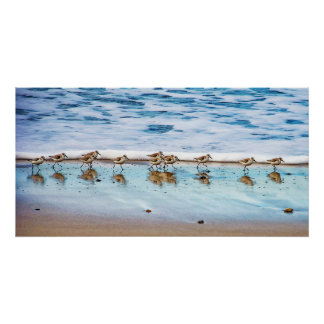 Sandpipers Running Along The Beach Poster