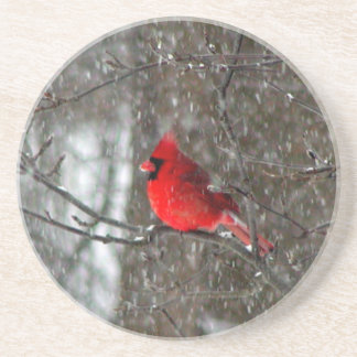 Sandstone coaster with photo of male cardinal