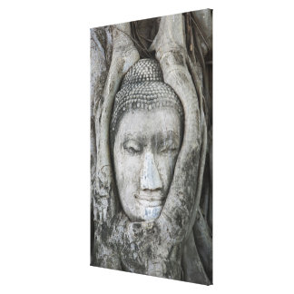 Sandstone head of Buddha surrounded by tree Canvas Print