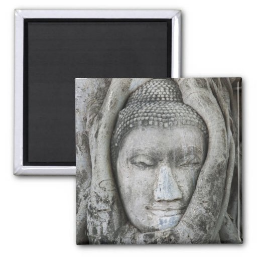 Sandstone head of Buddha surrounded by tree Refrigerator Magnets