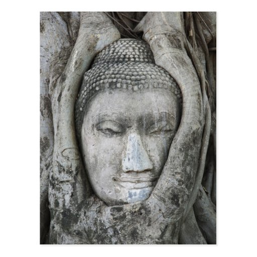 Sandstone head of Buddha surrounded by tree Post Cards