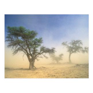 Sandstorm In Kalahari Desert, Kgalagadi Postcard