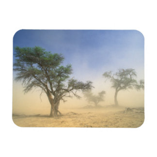 Sandstorm In Kalahari Desert, Kgalagadi Rectangular Photo Magnet