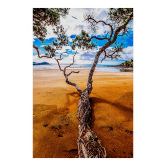 Sandy Bay Pohutukawa Tree Poster