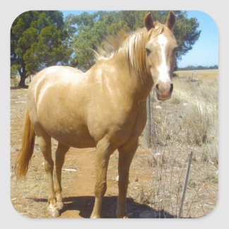 Sandy_Brown_Horse,_ Square Sticker