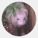 Sandy Ferret Classic Round Sticker