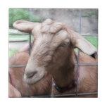 Sandy la cabra en la puerta teja  ceramica