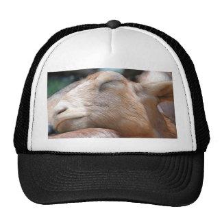 ¡Sandy la cabra - tiempo de la siesta! Gorras De Camionero