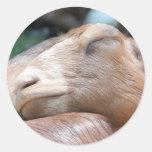 ¡Sandy la cabra - tiempo de la siesta! Pegatina Redonda