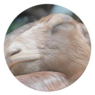 ¡Sandy la cabra - tiempo de la siesta! Platos Para Fiestas