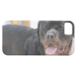 Sandy Rottweiller iPhone 5 Cover