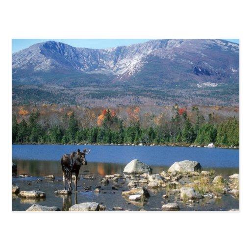Sandy Stream Pond Postcard