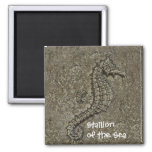Sandy Textured Seahorse Photograph Refrigerator Magnets