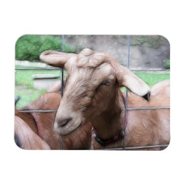 Sandy The Goat At The Gate Magnet