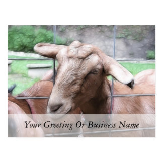 Sandy The Goat At The Gate Postcard