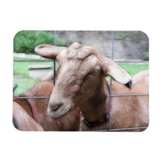Sandy The Goat At The Gate Rectangular Photo Magnet