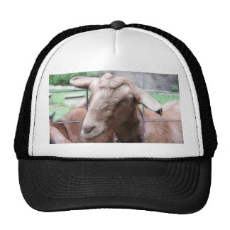 Sandy The Goat At The Gate Trucker Hat