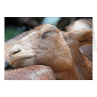 Sandy The Goat - Nap Time! Card