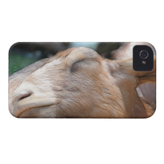 Sandy The Goat - Nap Time! iPhone 4 Cover