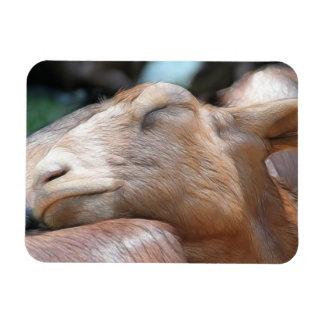 Sandy The Goat - Nap Time! Rectangular Photo Magnet