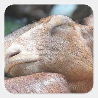 Sandy The Goat - Nap Time! Square Sticker