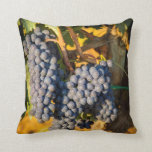 Sangiovese grapes in a vineyard throw pillows