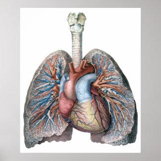 Sangre humana de los órganos del corazón de los póster