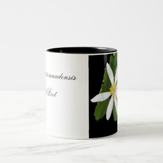 Sanguinaria canadensis Two-Tone coffee mug