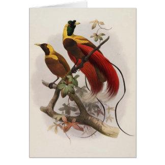 Sanguinea de Elliot - de Paradisea - ave del paraí Felicitaciones