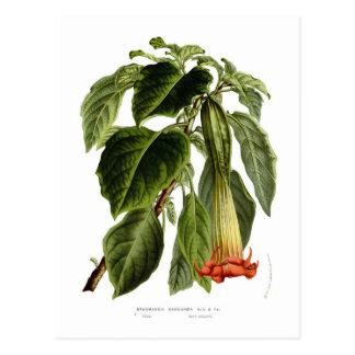 Sanguinea del Brugmansia (la trompeta del ángel) Tarjeta Postal