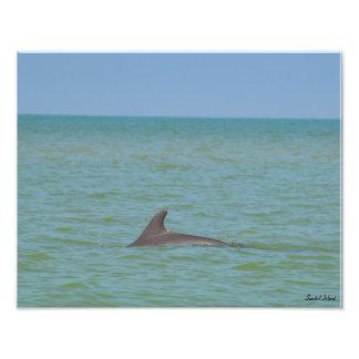 Sanibel Dolphin photo print
