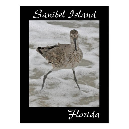 Sanibel Island Sandpiper Postcard