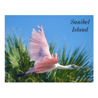 Sanibel Island Spoonbill postcard