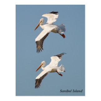 Sanibel Pelicans in Flight Postcard