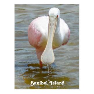 Sanibel Roseate Spoonbill postcard