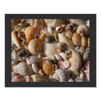 Sanibel Seashell Collection Print
